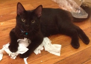Vader loves playing with toilet paper!